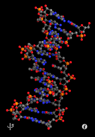 A DNA ball-and-stick model on the iPhone